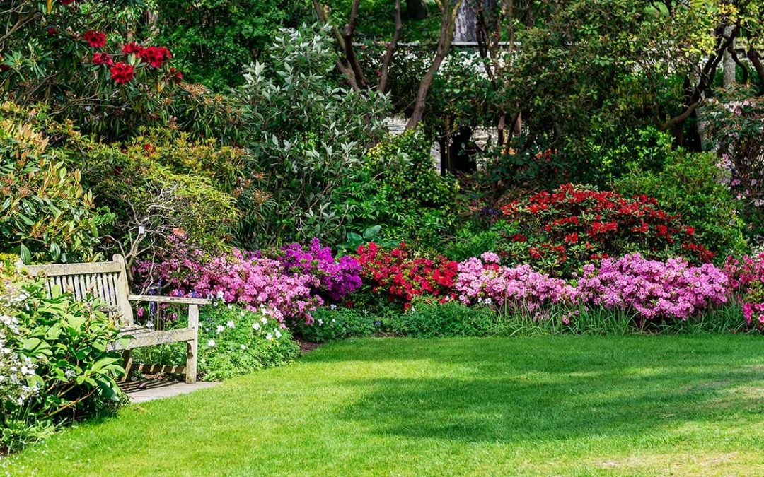 featuredimage-Everything-you-should-know-about-soft-landscaping
