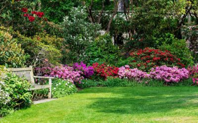 Everything you should know about soft landscaping