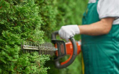 Factors to consider for your garden hedging endeavour