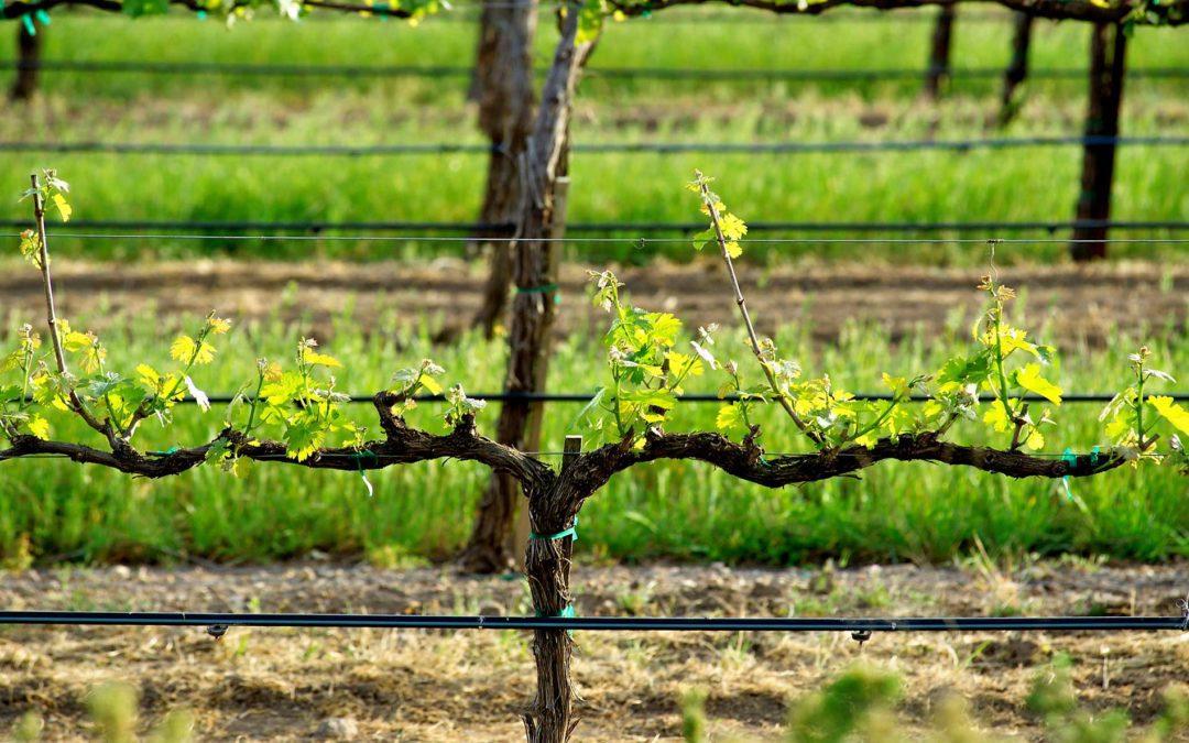 featuredimage-Vineyard-Irrigation