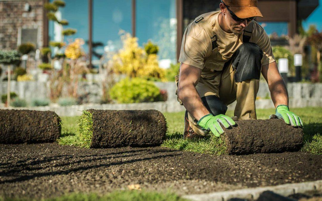 featuredimage-What-should-you-know-about-lawn-installation-and-seeding
