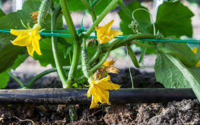 Why Use Drip Irrigation?
