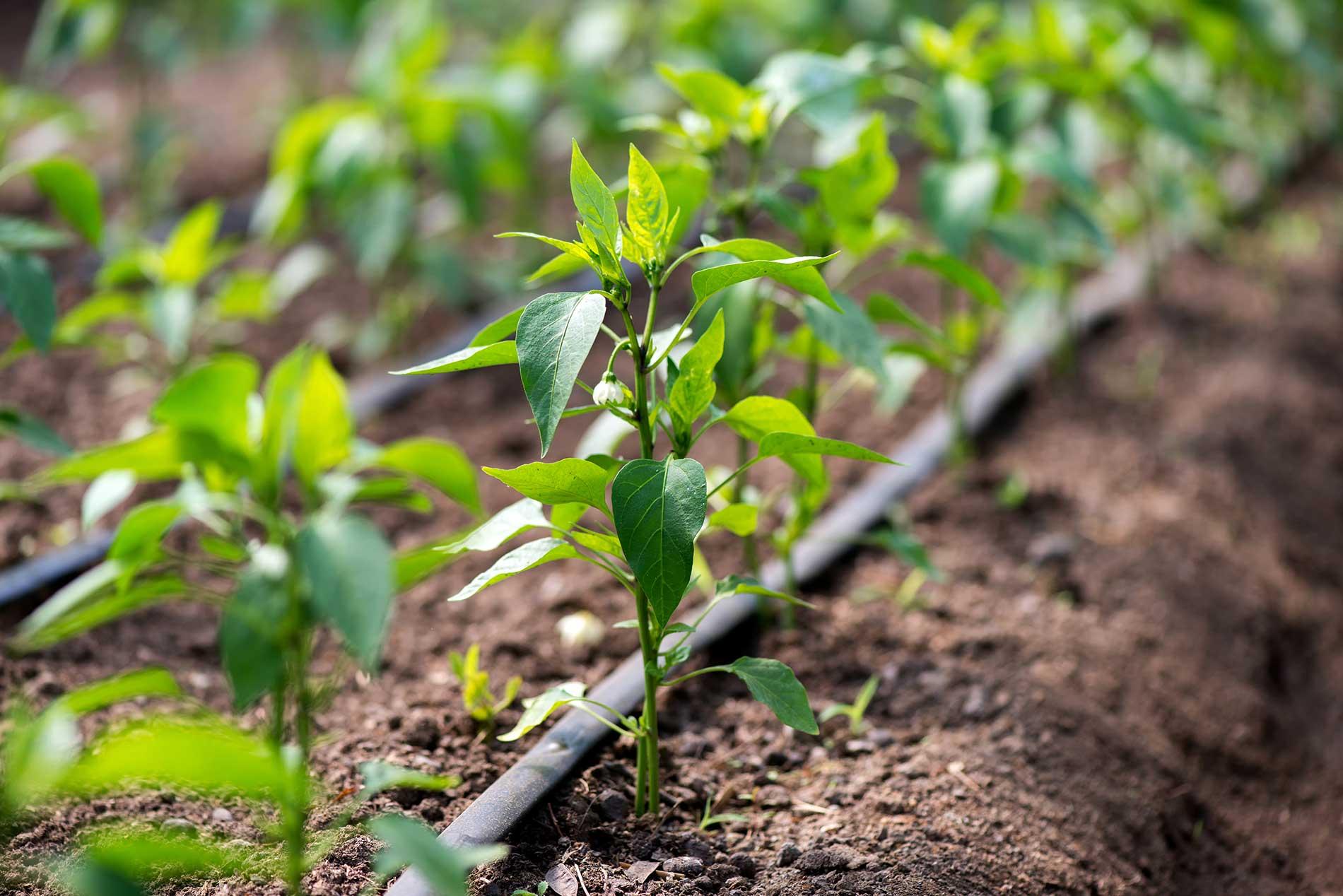 water-conservation-emeraldirrigation